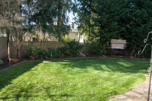 backyard-7104