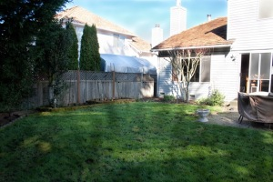 backyard-7107