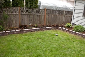 backyard-7753