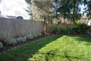 backyard-7103