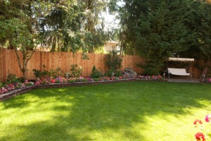 backyard_complete-8403