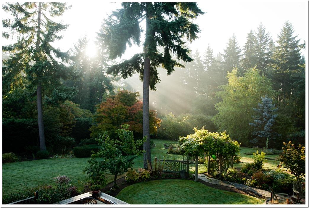 Backyard-0285