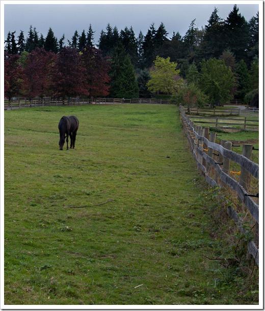 Horse-0031