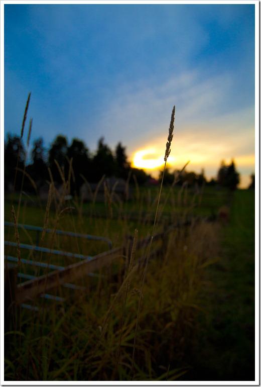 Landscape-0012