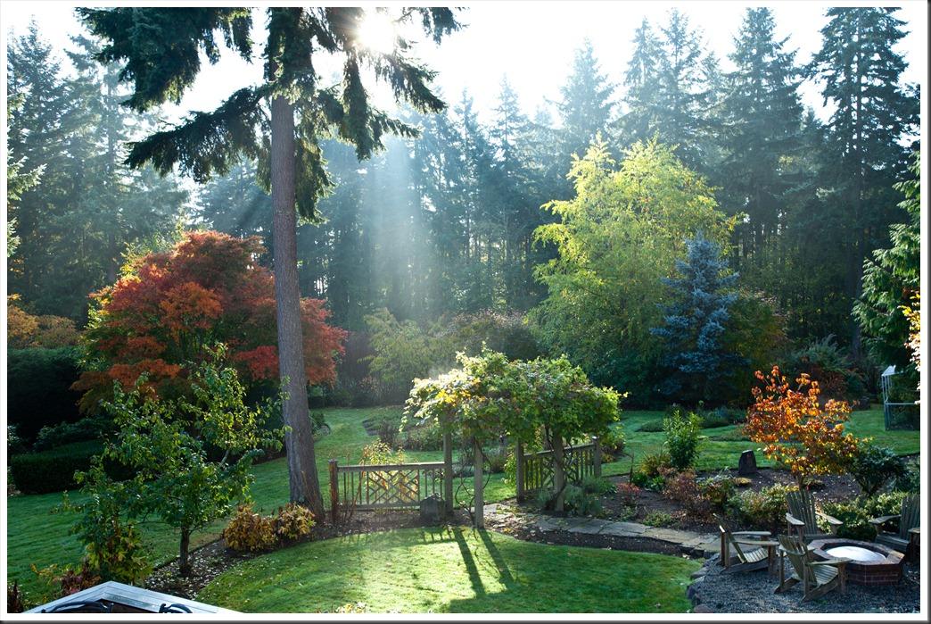 Backyard-0715