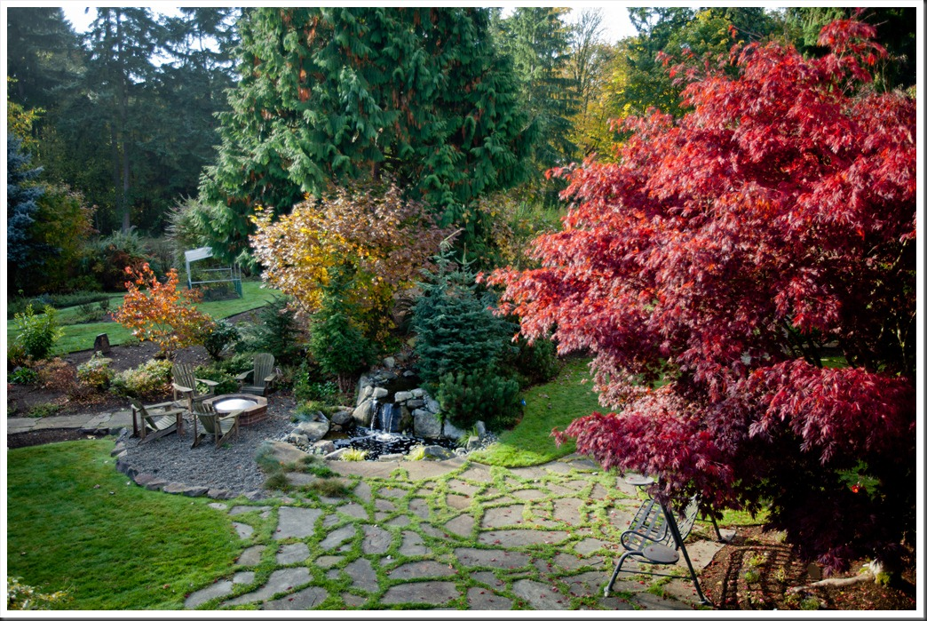 Backyard-0719