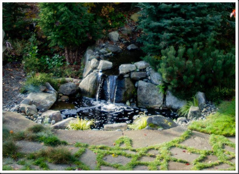 Pond-0719