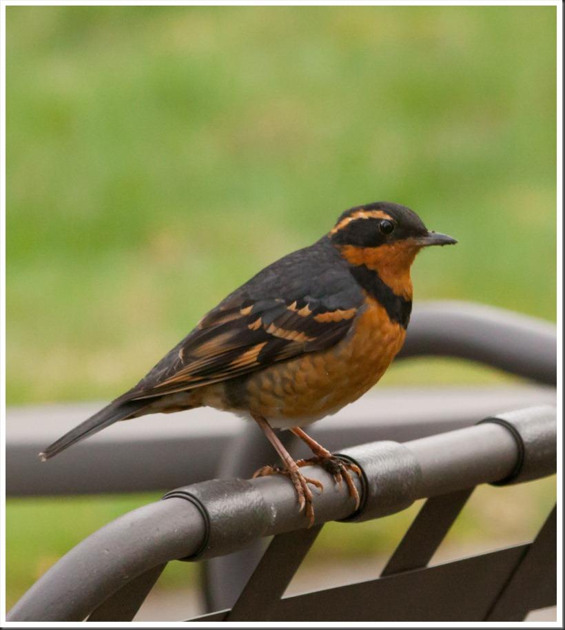 Bird-2856
