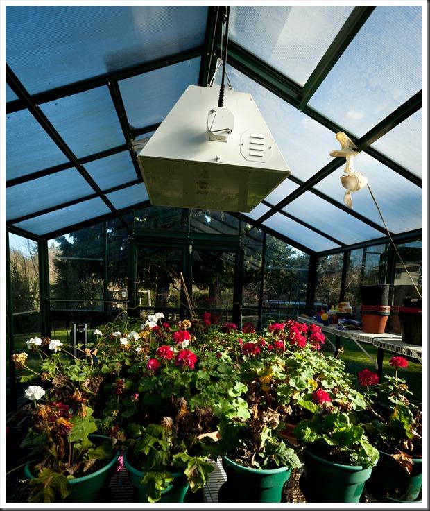 Greenhouse-2644
