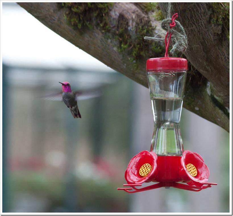 hummingbird-2863