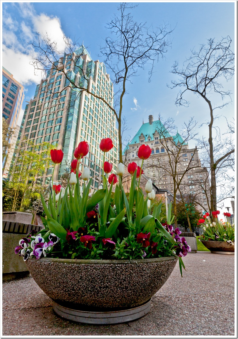 Vancouver_Tulips-2
