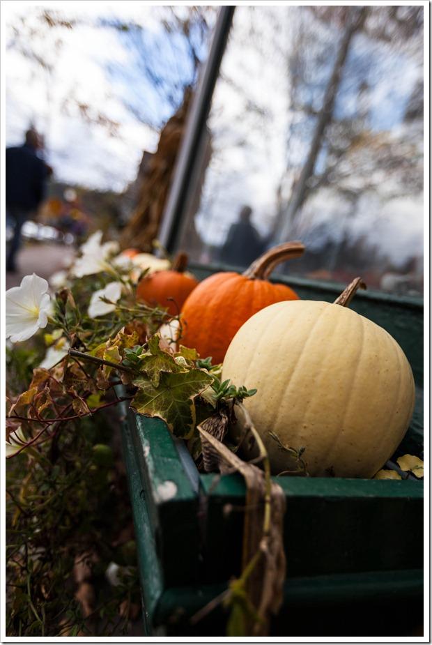 pumpkins-5993