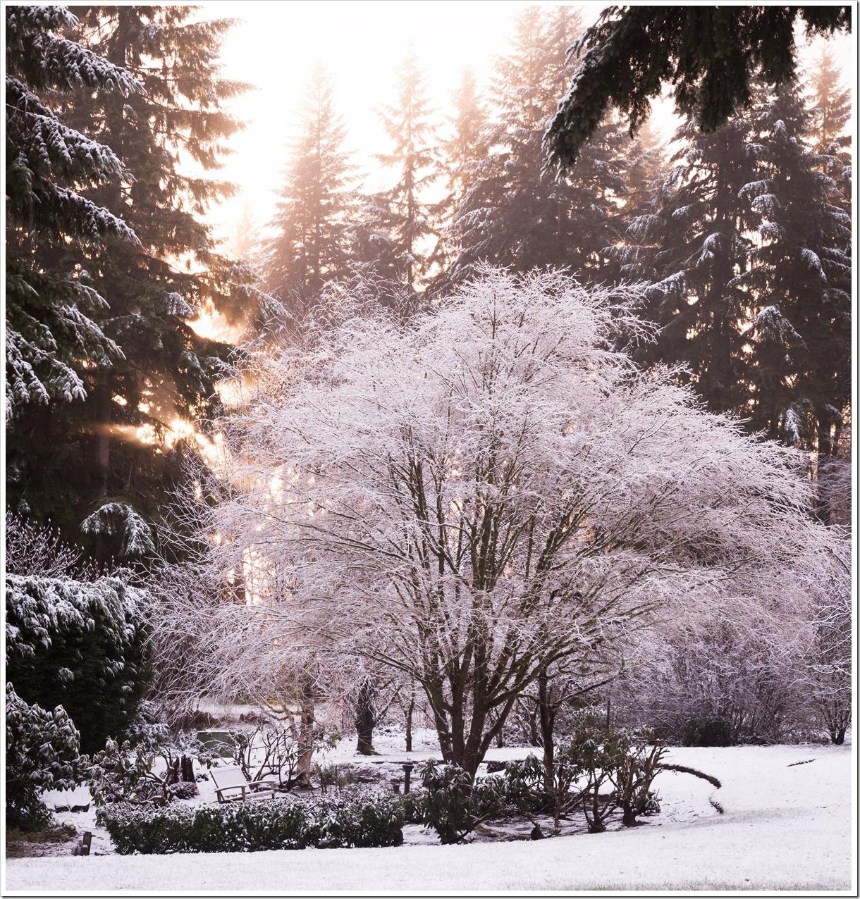Snow-7879