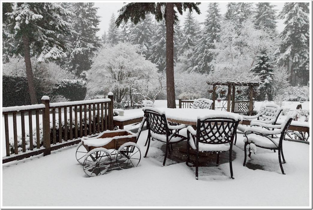 Snow-9017